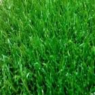 Искусственная трава Ideal ERBA, высота ворса 23 мм